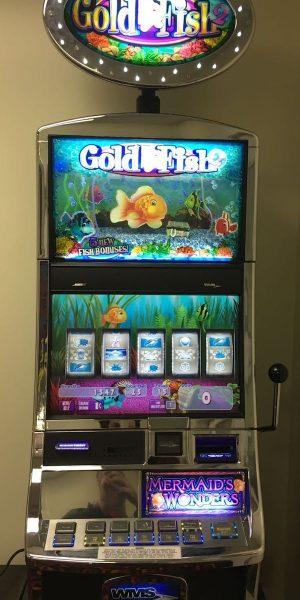 Gold Fish 2